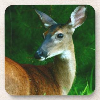 Deer Wildlife (Doe, Buck) Drink Coffee Coasters
