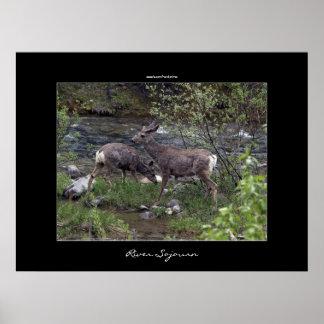 Deer Wildlife River Poster