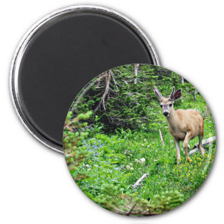 Deer - Young Buck 2 Inch Round Magnet