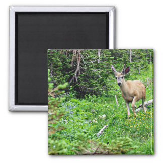 Deer - Young Buck 2 Inch Square Magnet