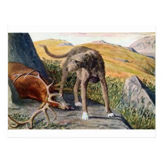 Deerhound escocés tarjetas postales