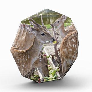 Deers Acrylic Award