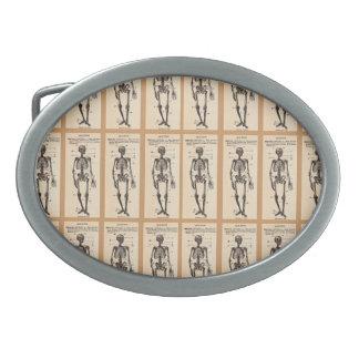 Definición adaptable del esqueleto del vintage hebillas cinturon ovales