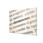 Definición de los cromosomas en la página impresiones en lona