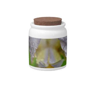Defining Desire Candy Jars