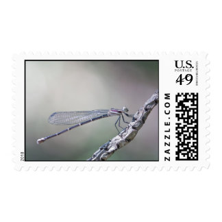 defining serenity postage