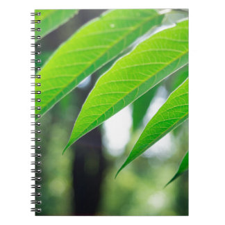 Defocused and blurred branch ailanthus notebook