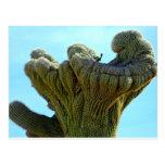 deformed saguaro cactus.jpg postcard