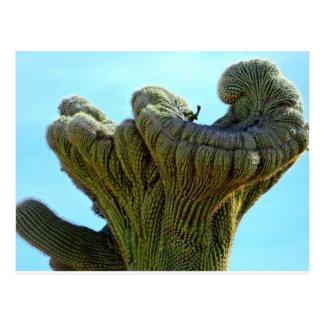 deformed saguaro cactus.jpg postcards