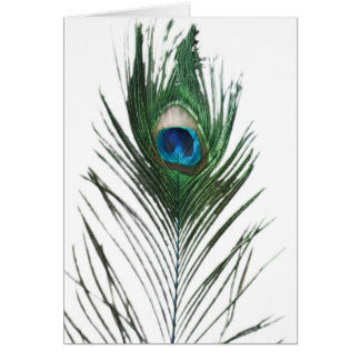Defused Peacock Feather Card