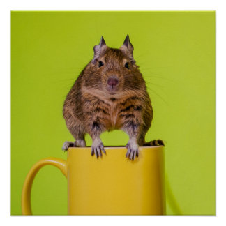Degu on a Yellow Cup Poster