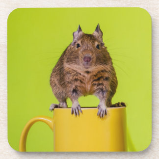 Degu Sitting on Yellow Mug Drink Coaster