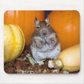 Degu with Pumpkin and Squash Mousepad