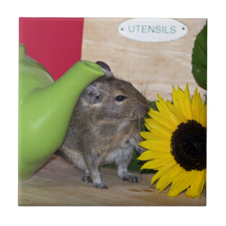 Degu with Teapot & Sunflower Small Square Tile