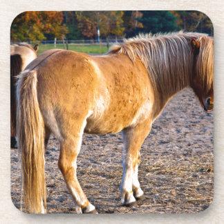 Dehesa de caballo en la luz de otoño posavasos