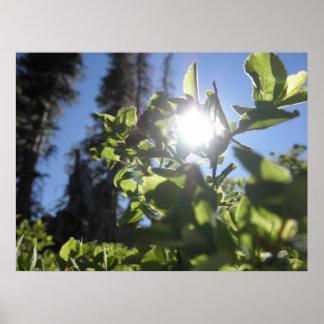 Deje el Sun brillar a través Poster