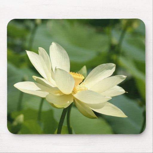 Del agua flor lilly alfombrilla de ratón