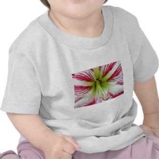 Del Amaryllis cierre para arriba y personal Camisetas