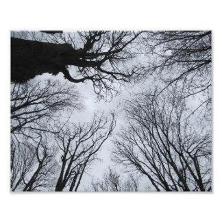 """Del árbol el 10"""" por todas partes x 8"""" impresión fotografía"""