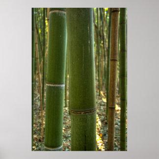Del bambú cierre para arriba posters