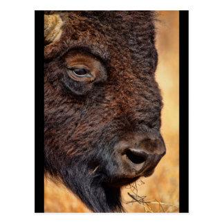 Del búfalo cierre para arriba postal