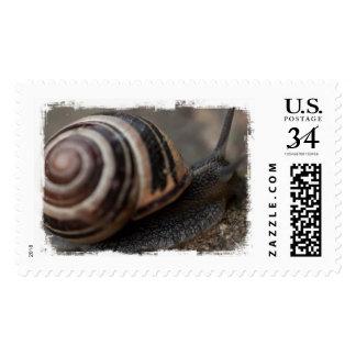 Del caracol cierre para arriba sello
