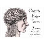 Del cerebro humano del ejemplo de Cogito suma ergo Tarjetas Postales