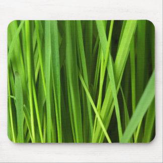 Del cierre verde botánico para arriba - hojas de mousepad