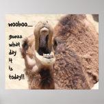 "¡Del ""conjetura divertida día de chepa"" del camell Poster"