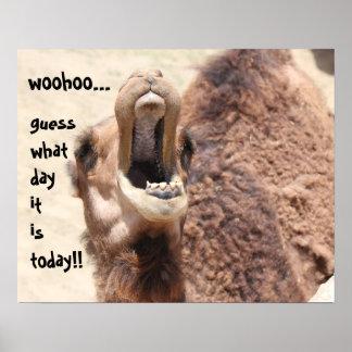 ¡Del conjetura divertida día de chepa del camell Poster