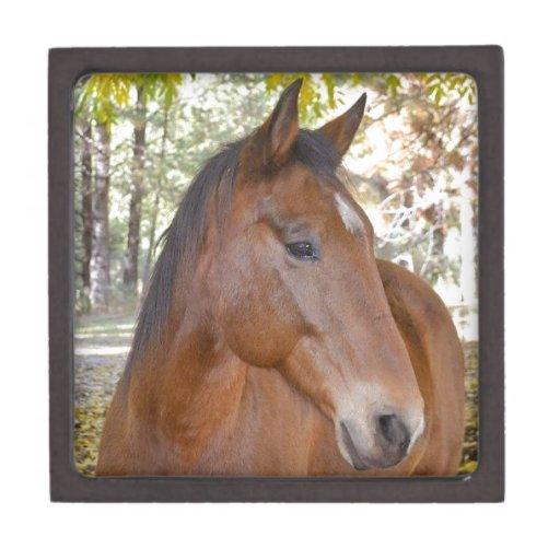 ~ del disparador el caballo increíble del rescate cajas de recuerdo de calidad