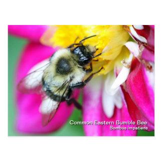 Del este comunes manosean la postal de la abeja