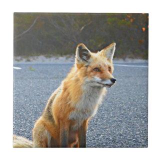 Del Fox cierre para arriba Azulejo Cuadrado Pequeño