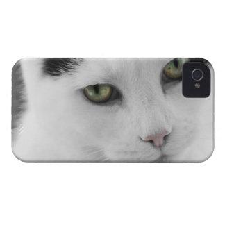 Del gato caja blanca del iPhone 4 de There™ apenas iPhone 4 Fundas