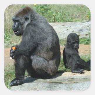 Del gorila del tiempo pegatinas hacia fuera pegatina cuadrada