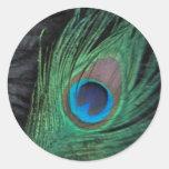Del pavo real todavía de la pluma pegatina negro
