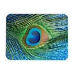 Del pavo real todavía de la pluma vida azul reluci imán de vinilo
