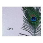 Del pavo real todavía de la pluma vida blanca relu postales