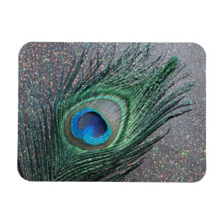 Del pavo real todavía de la pluma vida negra brill iman rectangular