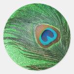 Del pavo real todavía de la pluma vida verde etiquetas redondas