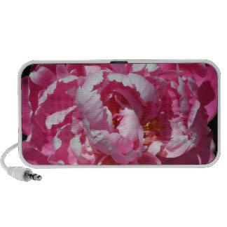 Del Peony floración rosada deliciosa solamente Altavoces