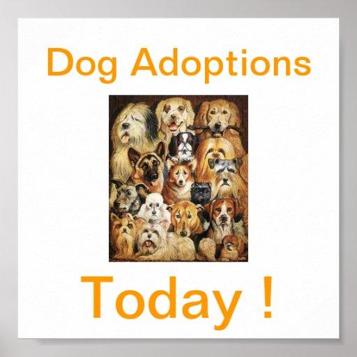 Del perro de las adopciones muestras hoy impresiones