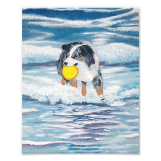 """Del """"pintura australiana perro del disco volador fotografías"""