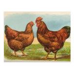 """Del """"postal pollo del rojo de Rhode Island"""" del vi"""