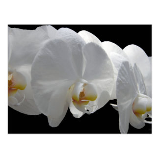 Del-Ray White Orchids Postcard