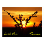 Del Rio Texas Brush Sunset Postcard