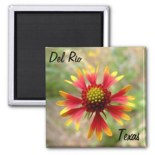 Del Rio Texas magnet blanketflower wildflower texa
