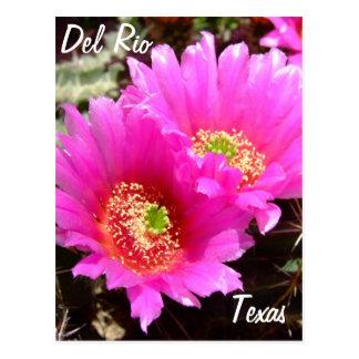 Del Rio Texas souvenirs pink cactus flower Post Cards