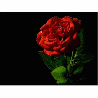 Del rosa rojo todavía de la macro foto del estudio escultura fotográfica