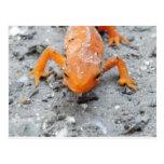 Del Salamander postal cercana para arriba